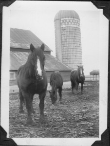 Horses and old barn